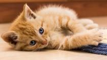 How Do I Trim My New Kitten's Nails?