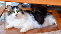Keep your cat happy with multiple litter boxes