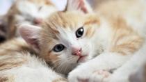 Kitten Care for Growing Kittens