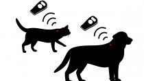 Microchipping 101: Why is it Important to Microchip My Pet?
