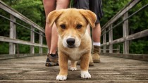 Dog walking down a bridge