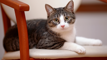 My Cat is Perfectly Healthy: Why Should I See a Vet?