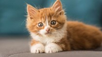 Two Ways of Spaying a Cat: Ovariohysterectomy vs. Ovariectomy