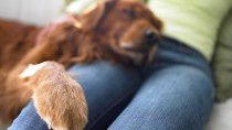 What Should You Do if Your Dog Has a Swollen Toe?