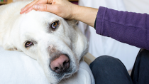 What to Expect from Your Senior Dog's Checkup
