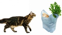 Why Does My Cat Chew Bags?