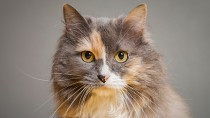 Your Cat's War against Big, Bad, Infectious Diseases