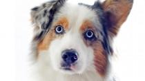 Progressive Retinal Atrophy in Dogs