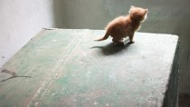 Protect Your Kitty: Classic Kitten Dangers