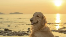Protect Your Pet from the Sun!