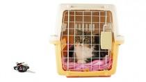 Reducing Cat Stress during Car Rides