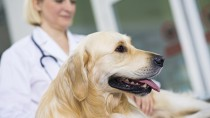 Reducing Your Dog's Fear of the Veterinarian