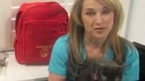 building a pet disaster kit