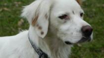 Sad looking white mutt