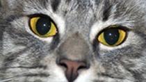 Gastroenteritis in cats