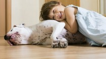Setting the Stage for a Safe Interaction between Dogs and Kids