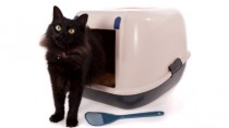 cat pooping in litter box