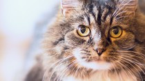Ten Common Causes of Kidney Disease in Cats
