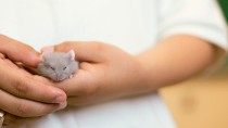 Top Ten Ways to Keep Your Hamster Healthy