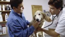 Happy dog at vet's