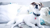 Using Cold Therapy for Dogs