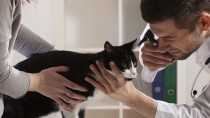 Veterinary Clinical Trials Explained