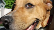 A flatulent pet can indicate a medical condition