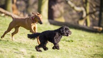 What to think about when socializing your dog