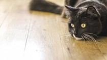 Why do My Cat's Stools Smell so Bad?