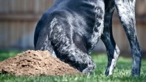Why Dogs Dig