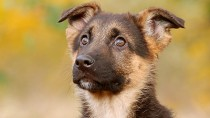 Why Should I Neuter My New Puppy?