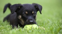 Why Should I Spay My Puppy?