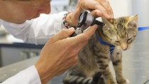 Why Your Cat Needs Regular Checkups