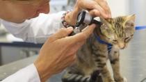 Why Your Cat Needs Regular Checkups