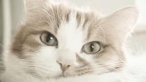 Your Cat's Heart: Feline Heart Disease