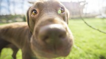 Is Your Dog's Nose an Accurate Indicator of His Overall Health?