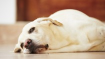 The top 10 signs your dog may be sick (and what you can do about it)