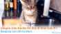 7 Surprisingly Simple Life Hacks for You & Your Cat