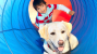Can Dogs Help Children With Autism?