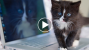 Cats Dominated The Viral Videos This Week–See How!