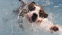 New Dog Swimming Study Surprises Canine Community