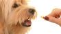 FDA Warns Popular Topical Pain Medication Toxic to Pets