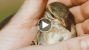 Rescued Baby Bird is Returned to Parents