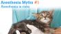 Anesthesia Myths