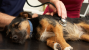 Dog and Cat Anesthesia Myths Part 3