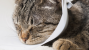 Dog and Cat Anesthesia Myths Part 2