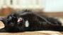 Feline Tooth Resorption