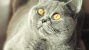 Histoplasmosis in cats