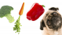 Is It Possible (Or Safe) to Make Your Pet a Vegetarian?