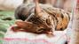 Feline Hypoparathyroidism